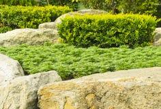 Flower. Rock garden with green plant Stock Photos