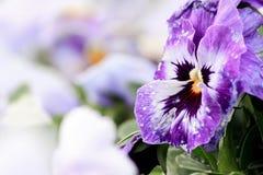 Flower. Freshly grown purple colored flower in the field full of flowers, macro, selective focus Royalty Free Stock Image