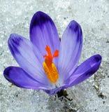 Flower. Springs flower in the garden Stock Photos