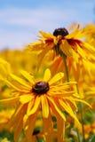 Flower. Downstairs, the Garden, yellow flowers, autumn flowers Stock Photo