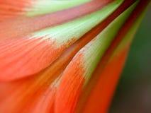 Flower  48 Royalty Free Stock Image