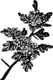 Flower. Black illustration of branch flower Royalty Free Stock Images