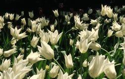 Flower. White Flower Stock Photo
