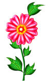 Flower. Pink colour flower with green leafs in isolate background stock illustration