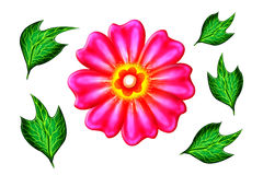 Flower. Pink colour flower with green leafs in isolate background royalty free illustration