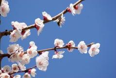 Flower. Spring flower on sky background Stock Photos