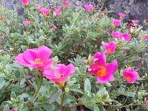 Flower2 Royalty-vrije Stock Fotografie
