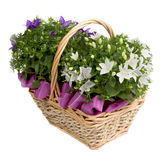 Flower. Gentle spring flowers in a basket Stock Images