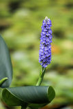 Flower湖 图库摄影