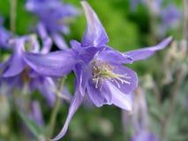 Flower. Purple flower detail shot Royalty Free Stock Images