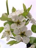 Flower. Spring flower stock photo