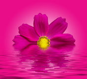 Flower. Beautiful flower with reflection on water - digital artwork Royalty Free Stock Photos