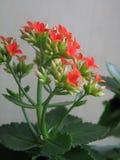 Flower. Closeup royalty free stock photos