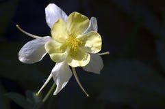 Flower. Yellow & white flower Stock Photos