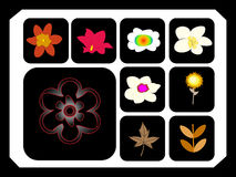 Flower. Different kinds of vector flower for you ,illustration Royalty Free Stock Photo
