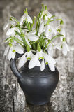 Snowdrops in Stoneware Vase Royalty Free Stock Image