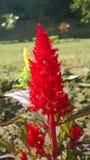 Flower1 Imágenes de archivo libres de regalías