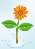 A flower. Small flower, grows in water Stock Image