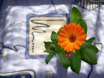 Flower. Beautiful orange flower royalty free stock photos