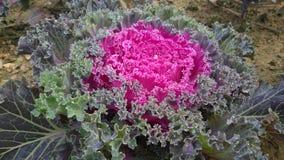 Flower5 Imagen de archivo libre de regalías