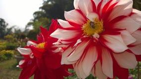 Flower10 Foto de archivo libre de regalías