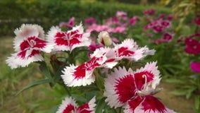 Flower11 Fotografía de archivo libre de regalías