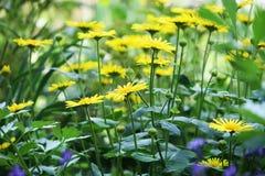 Flower. Many fresh spring flower in the garden Royalty Free Stock Image