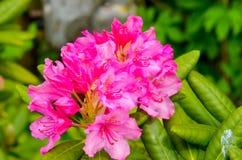 Flower4 Стоковое Изображение