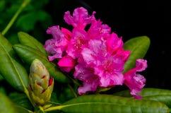 Flower2 Стоковая Фотография RF