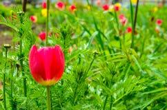 Flower3 Стоковые Изображения RF