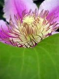 Flower. Closeup Royalty Free Stock Photo
