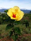 Flower0000 Stock Foto's
