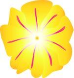 Flower vector illustration