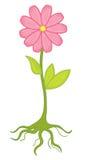 Flower. Illustration of flower on white Royalty Free Stock Images