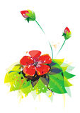 Watercolor flower illustration. In red with green leaves isolated on white Stock Photos