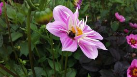 Flower003 Arkivfoton