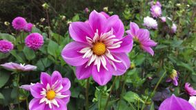 Flower001 fotos de archivo libres de regalías