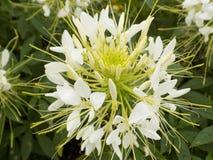 Flower005 lizenzfreie stockfotografie
