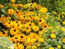 Flower007 lizenzfreie stockbilder
