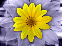 Flower Abstract. Yellow Flower Abstract Royalty Free Stock Photos
