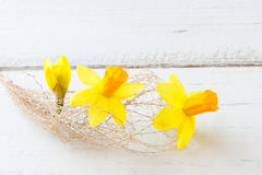 Flower abstract. Composition of yellow daffodil flowers and prickle dry plant royalty free stock photography