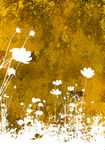 Flower abstract textures and b Royalty Free Stock Photos
