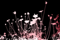 Flower abstract textures and backgrounds Stock Photography