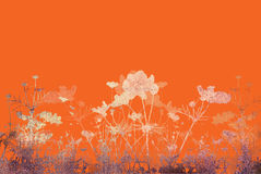 Flower abstract textures and backgrounds Royalty Free Stock Photography