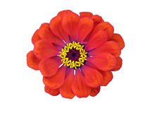 Flower. Adorable flower isolated on a white background royalty free stock photo