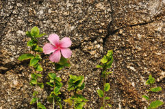 Flower against coarse rock background. Beautiful flower growing beside rock displays strong vitality Stock Image