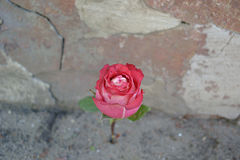 Flower against the wall stock image