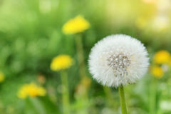 Flower air ball Royalty Free Stock Photography