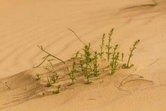 Sahara spring Royalty Free Stock Photos