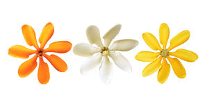 Flower All Color isolated on white background Stock Image